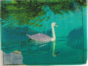 Tottenham marshes swan